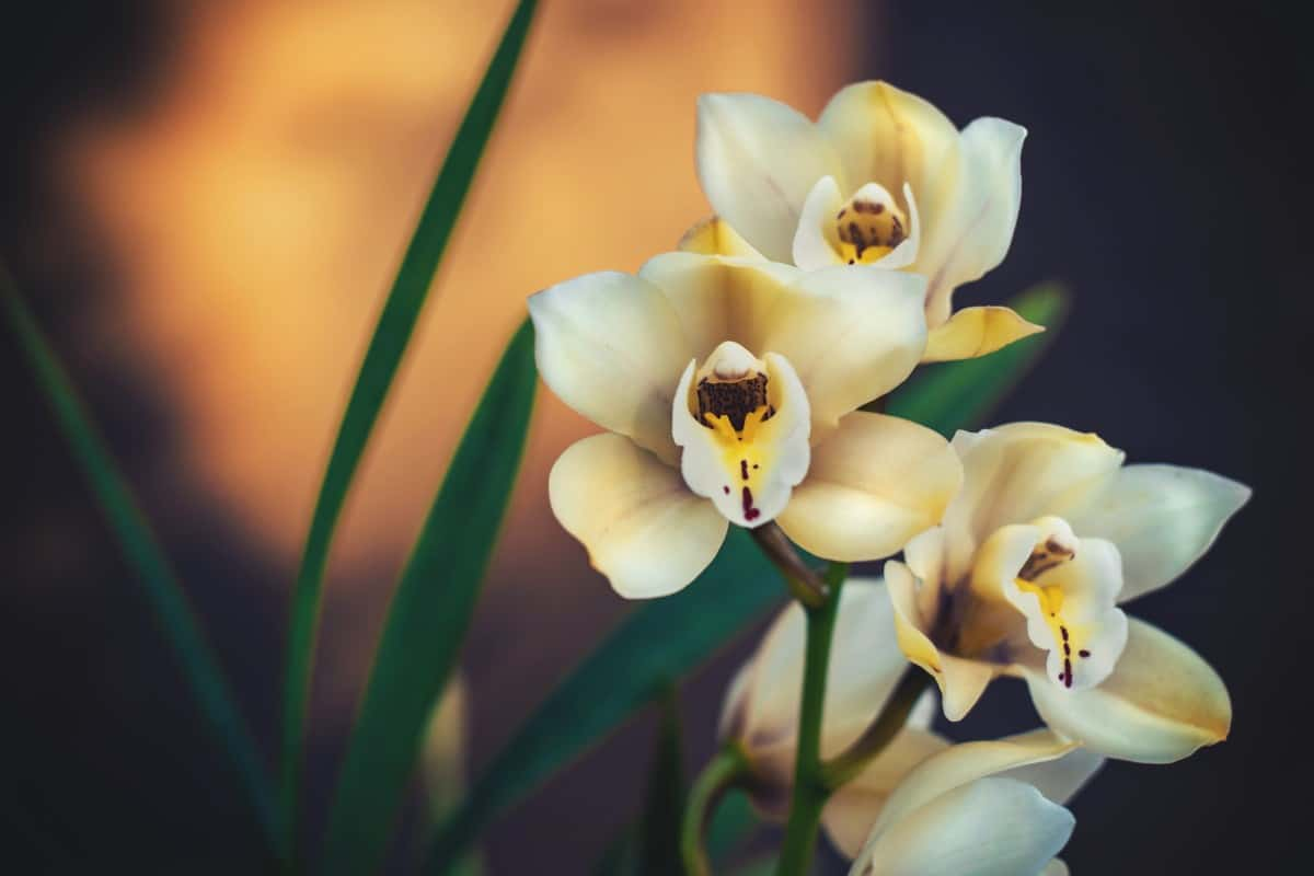 Are Orchids Parasites