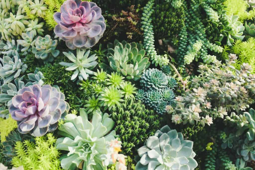 12 Colorful Succulents You Ll Absolutely Love Planted Shack