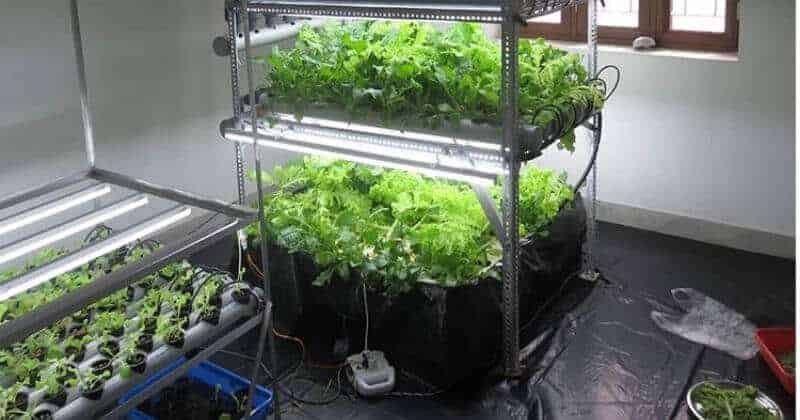Water Chillers for Hydroponics