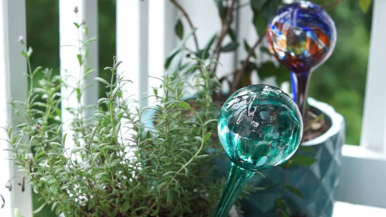 how long do watering globes last
