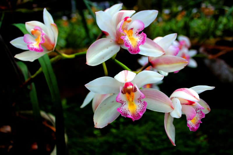 Can You Use Miracle Grow On Orchids Planted Shack