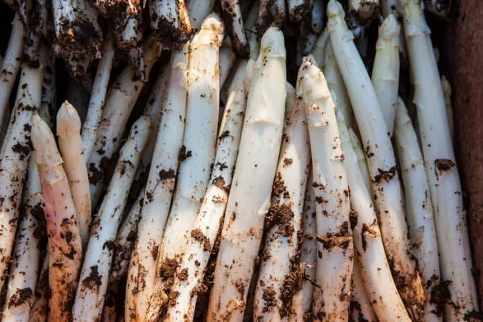 Does Asparagus Regrow After Cutting