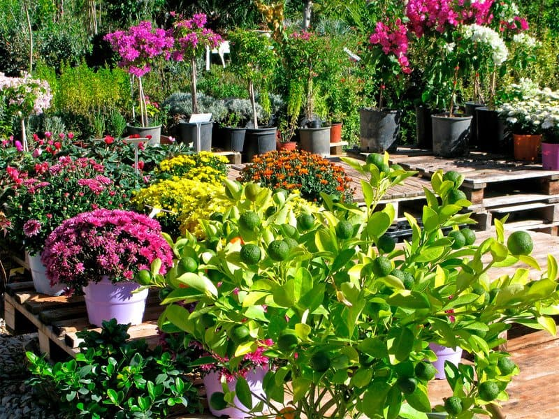 how to steralize pots without bleach