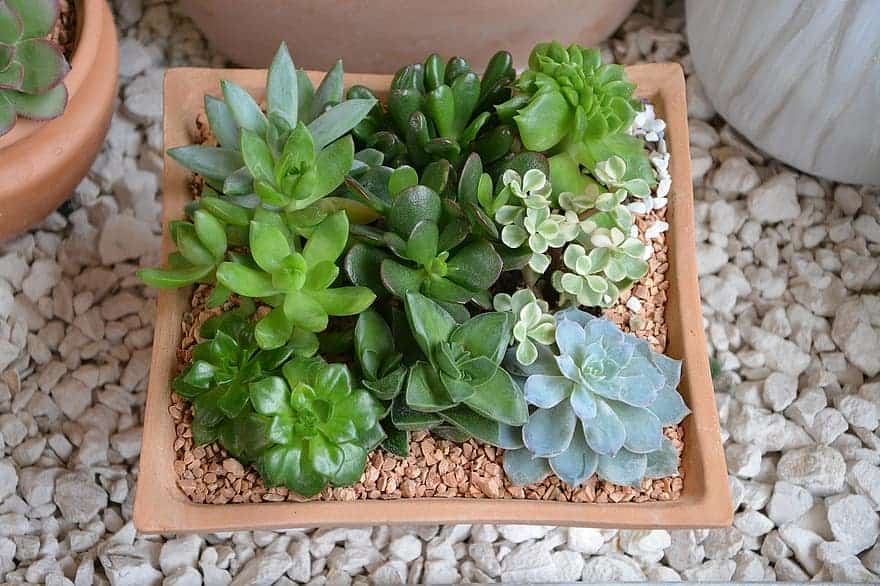 Best Succulents For Bathroom