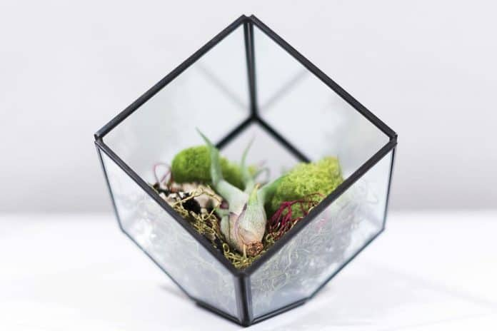 Best Succulents For Terrariums