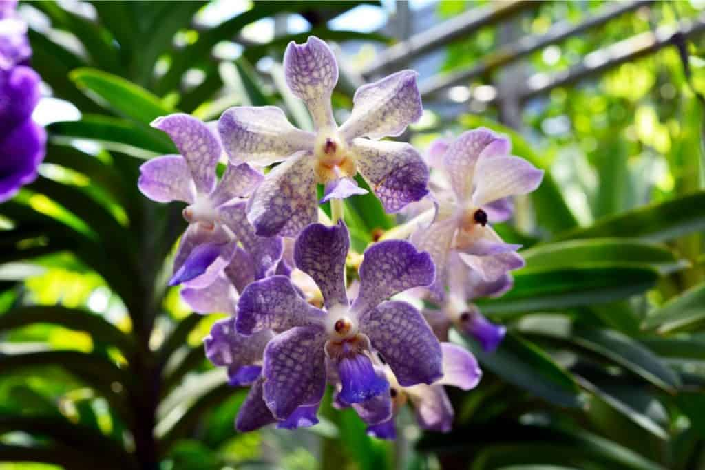 Can Orchids Survive Without Leaves