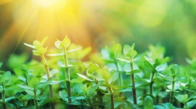 How to Make Plants Grow Faster: