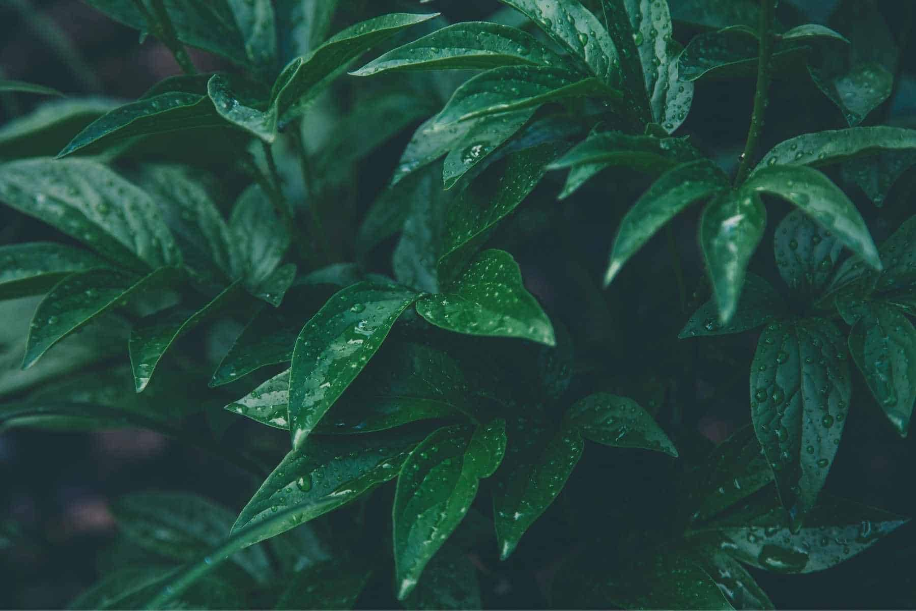 What Plant Produces The Most Oxygen