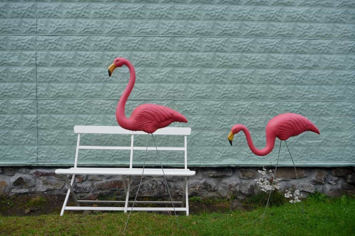 Why Do People Put Pink Flamingos on a Lawn