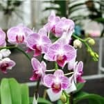 Will Orchid Leaves Grow Back