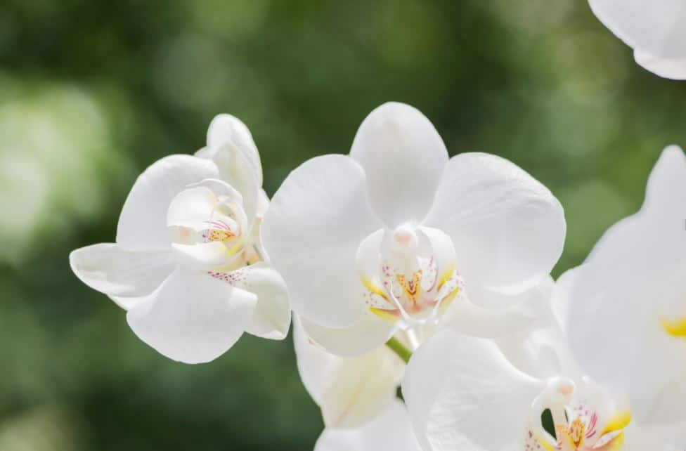 Best Orchids For Gardens