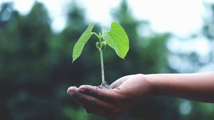 Can Plants Live Without Oxygen