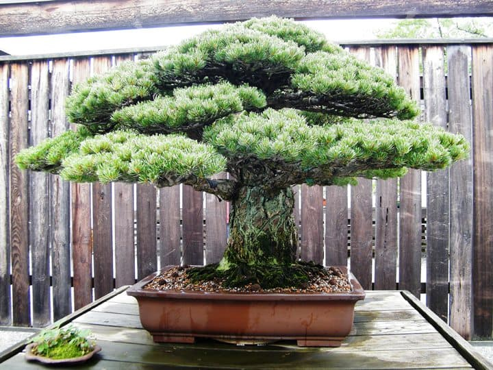 10 of the Most Expensive Plants In The World 1