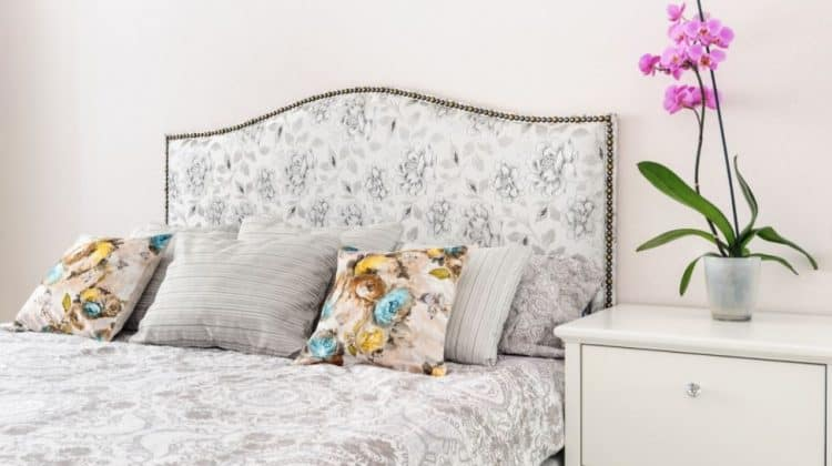 The 10 Best Orchids for Bedrooms