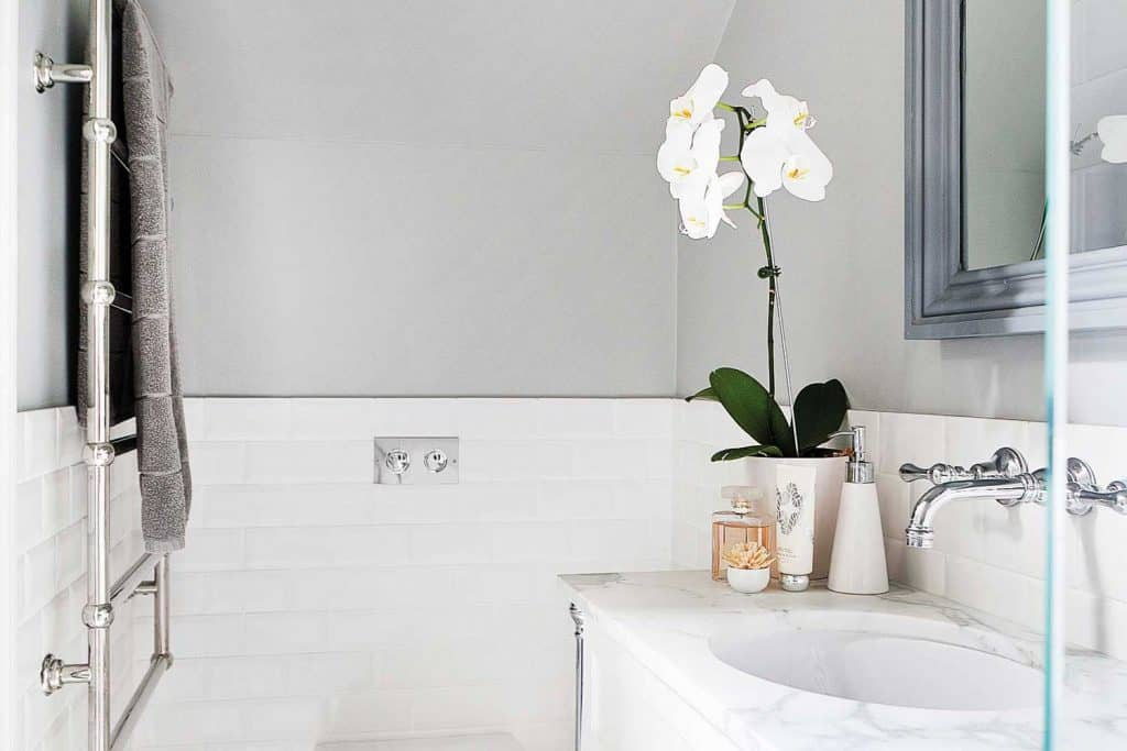 What Are The Best Orchids For Bathrooms