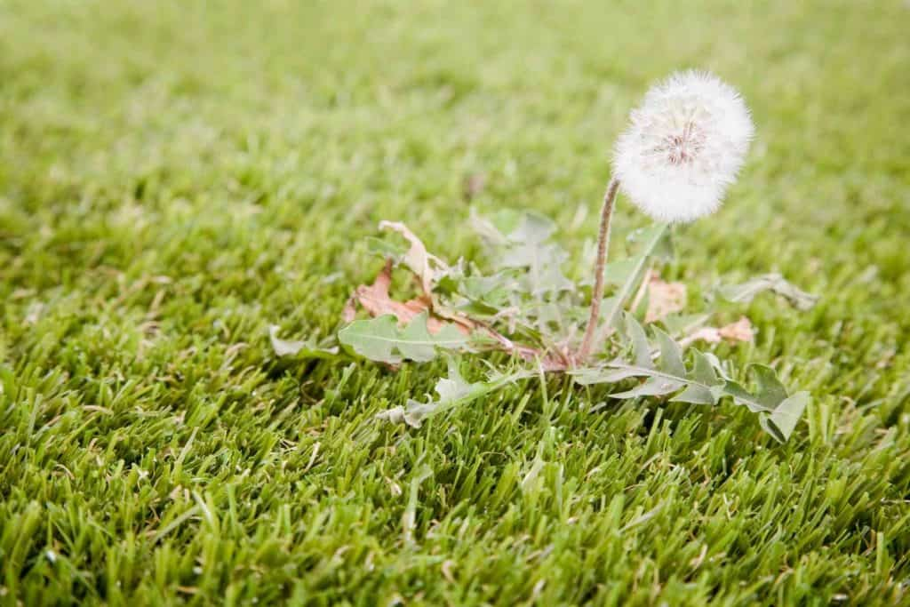 Will Lawn Fertilizer Kill Weeds