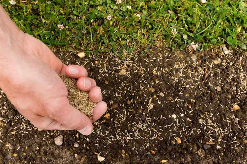 Will Lawn Seed Grow In Compost