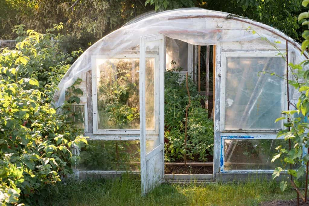 Best Ways To Keep Things Cool With Greenhouse Shading
