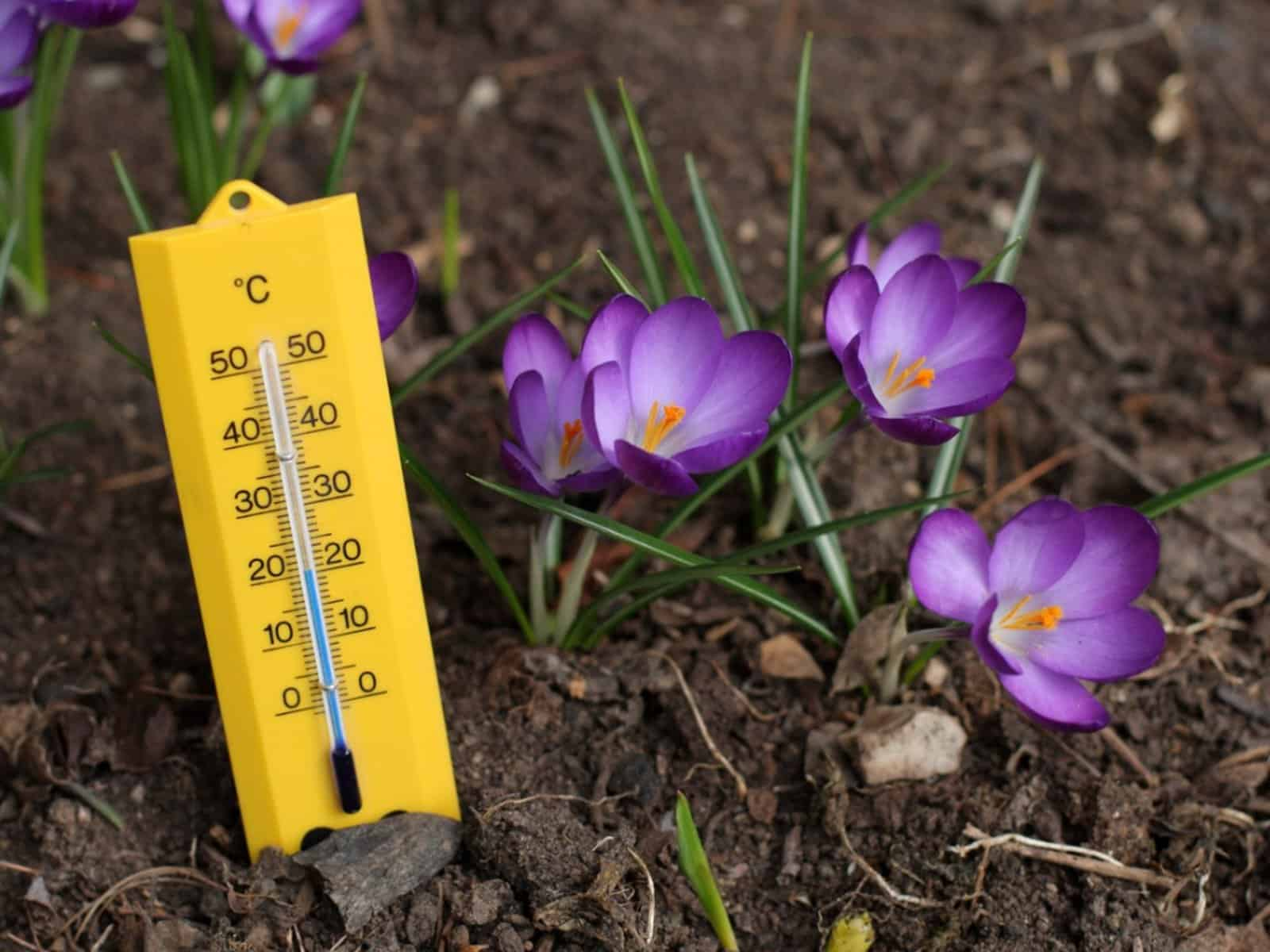 Increase The Soil Temperature If You Need To