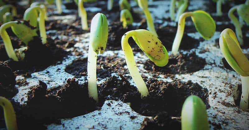 Understand The Requirements For Germination