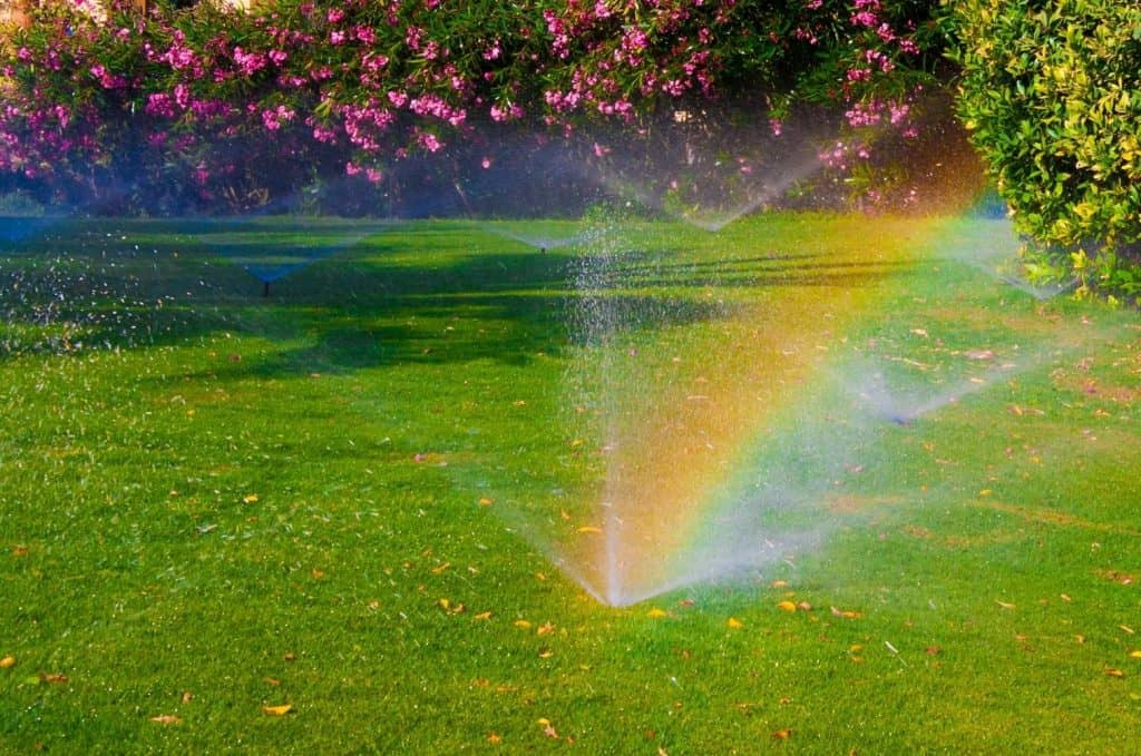 Am I Overwatering My Lawn