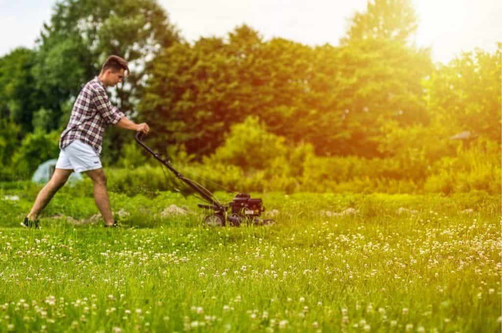 How Often Should a Lawn be Fertilized
