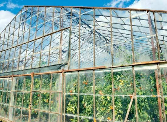 Can You Grow Tropical Fruit In A Greenhouse? 2