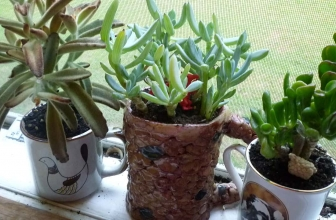 7 Fastest Growing Succulents